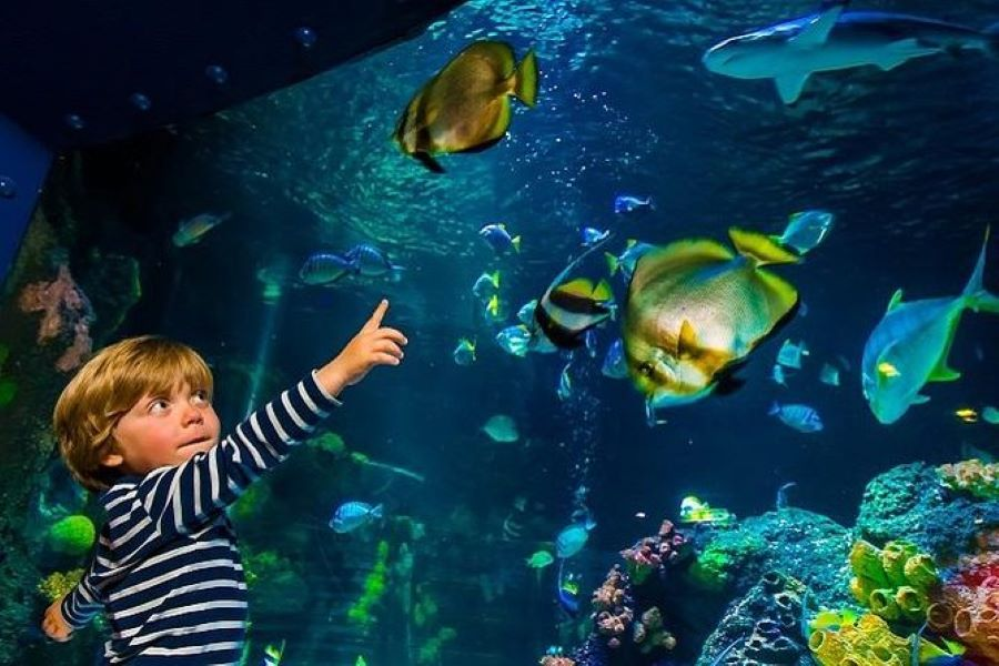 Aquarium Helsinki