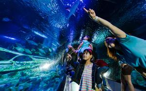 Thumbnail for Enjoy the Helsinki SEA LIFE aquarium with your Family