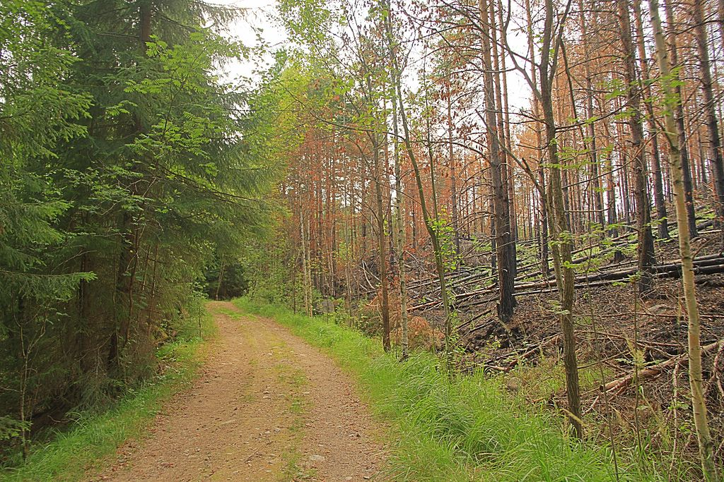 Nuuksio_National_Park